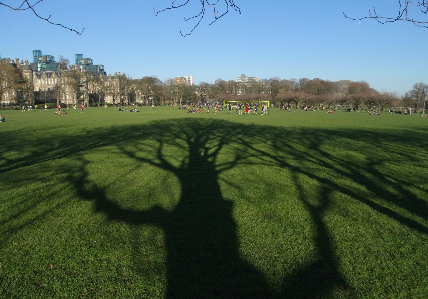 Tree shadows on Meadows