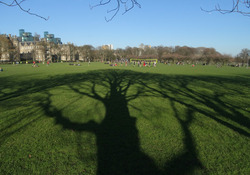 Tree shadows on Meadows