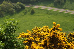 Gorse and Ground