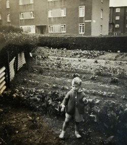 Vegetable growing in the 1950s