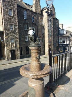 Greyfriars Bobby in a facemask