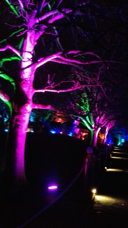 Avenue of lights