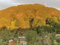 Sunset on Blackford Hill