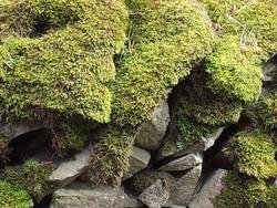 In the fairies' world, deep inside the greenest moss