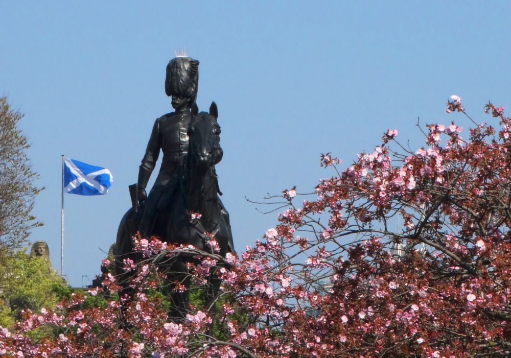 Saltire, cherry blossom and the Royal Scots Greys