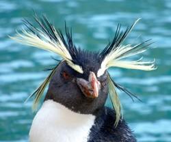 Penguins, penguins, penguins.