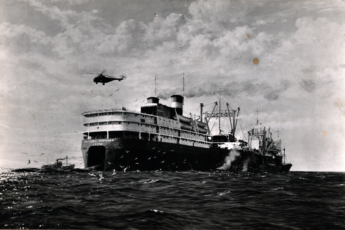 Whale Factory Ship 'Southern Venturer' c.1955