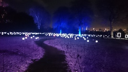 Light installation at Christmas at the Botanics