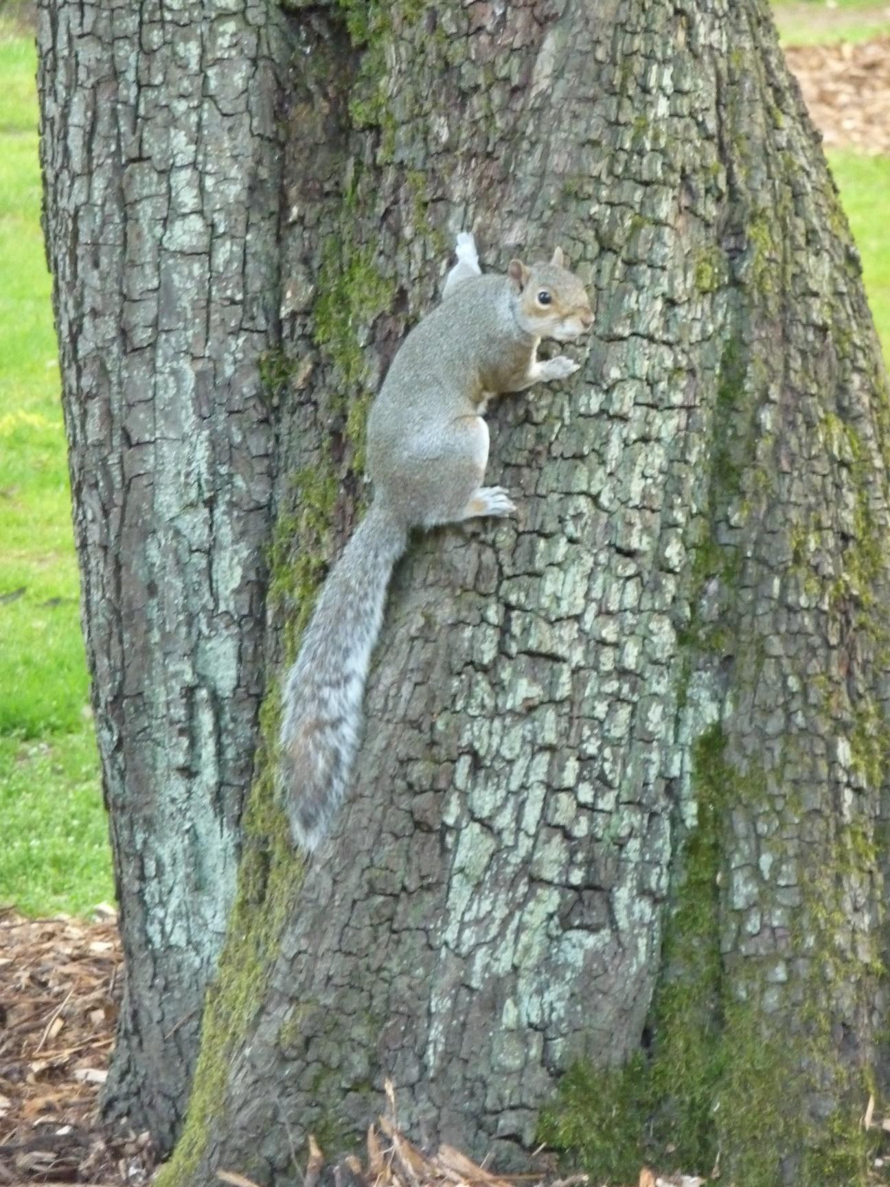 Squirrel at Botanic Gardens