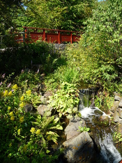 Japanese Garden at the Botanics