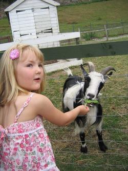 Happiness all round at Gorgie City Farm