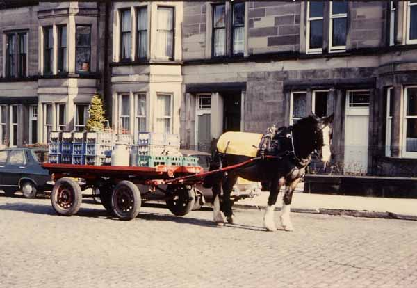 St Cuthbert's Milk Delivery Horse At Lauderdale Street, Marchmont, mid-1970s