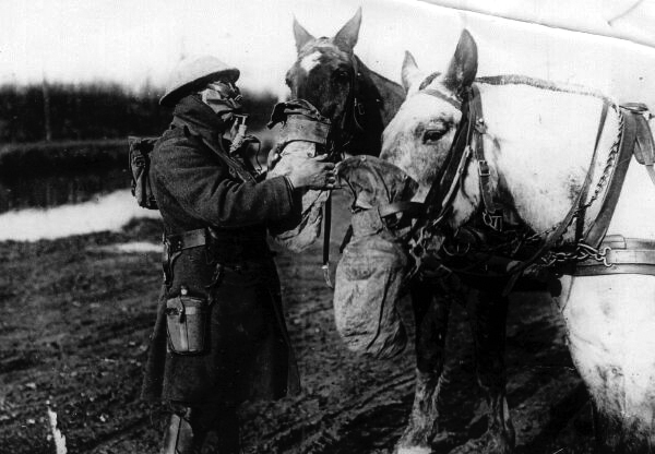 Man And Horse In Gas Masks 1914-1918