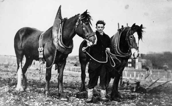 Ploughman And Horses At The End Of A Day's Work c.1930