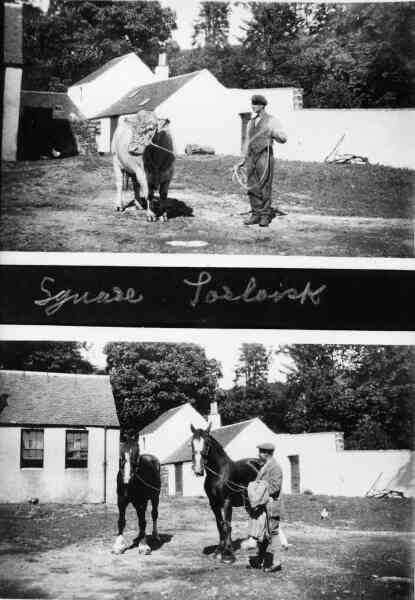Farm Animals In The Stable Square c.1930