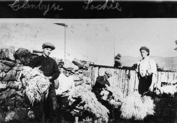 Sheep Shearing c.1926