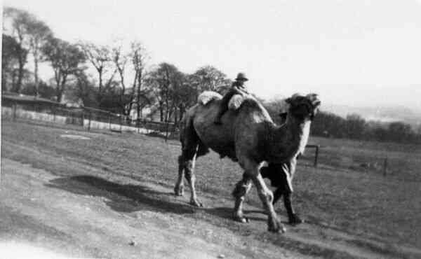Camel Ride At The Zoo 1934