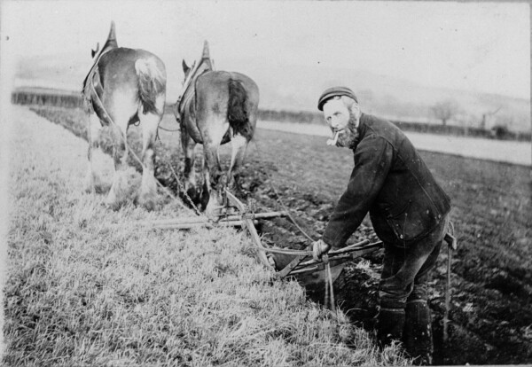 Ploughman Tilling Field At Saughtonhall Mains Farm c.1903