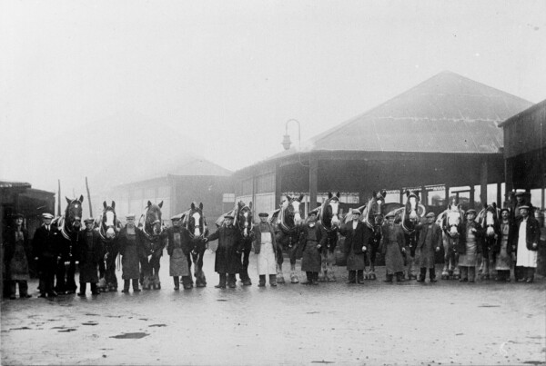 Delivery Horses At McEwan's Brewery Fountainbridge 1940