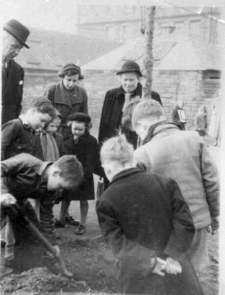 Tree Planting At Flora Stevenson School 1954