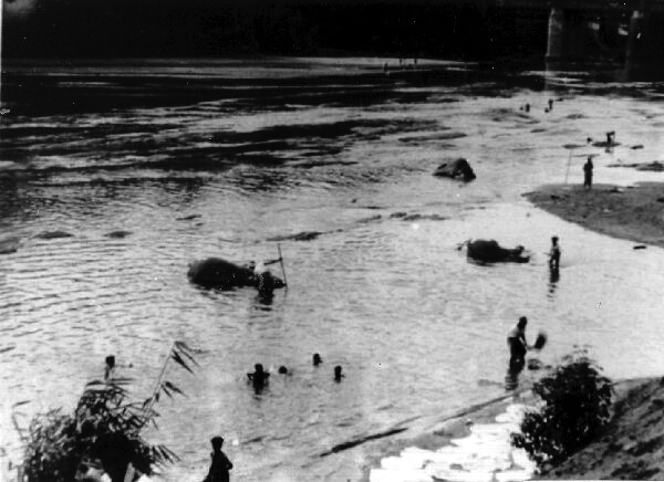 Elephants Bathing In River 1944