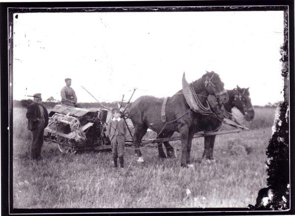 Farm Labourers With Work Horses And Crop Binder 1890s