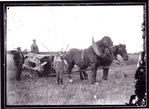 Work Horses And Crop Binder 1890s