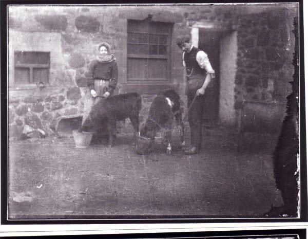 Young Man And Woman Feeding Calves At Bogie Farm In Fife c.1908