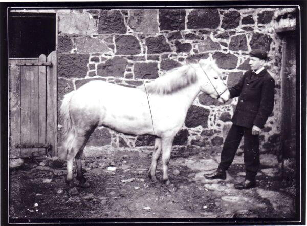 Young Man Leaning Back Holding Pony By Bridle At Bogie Farm In Fife c.1905