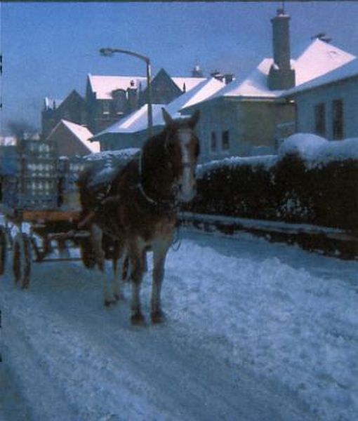 Co-op Horse With Milk Float Standing In The Snow On Cowan Road c.1975