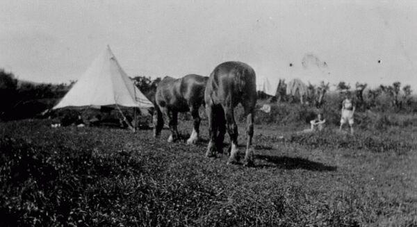 Boys Camping On Farm Near Aberdour c.1930