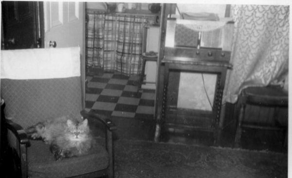 Tenement Interior With Cat At 9 Promenade Terrace In Portobello c.1950