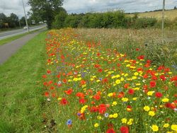 Floral Meadow A71 July 2015