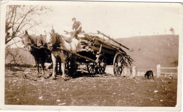 Horse-Drawn Cart Laden With Branches, late 1920s