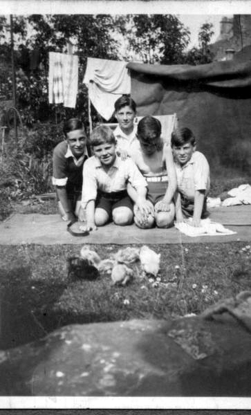 Group Of Boys With Young Chicks 1940