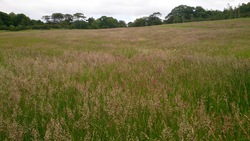 Living Landscape at Corstorphine Hill June 2015