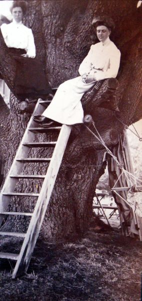 Edwardian Ladies Sitting In A Tree c.1911