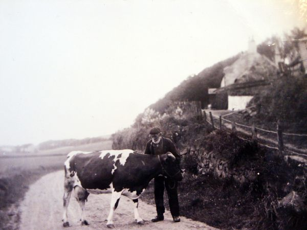 Farmer With Cow c.1910