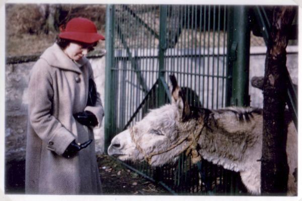 Woman Feeding Donkey At Edinburgh Zoo c.1952