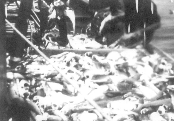 The Trawler 'Ocean's Gift II' With Its Catch Of Fifty-Two Boxes Of Cod 1930s