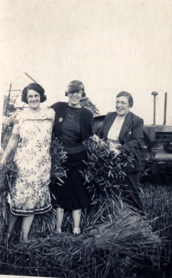Women Gathering Sheaves Of Wheat 1930s