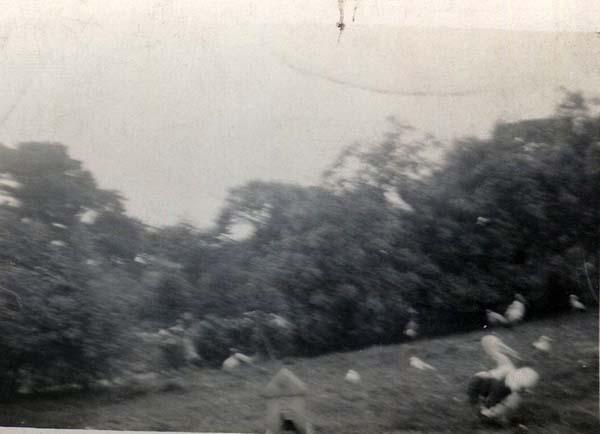 Birds In Park 1930s
