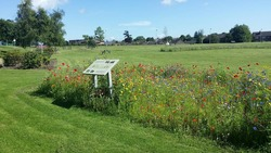 Floral Meadow at St Katharine's Park
