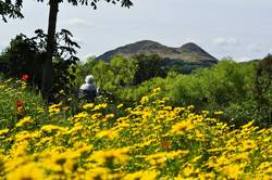 View to Arthur's Seat from Figgate Park
