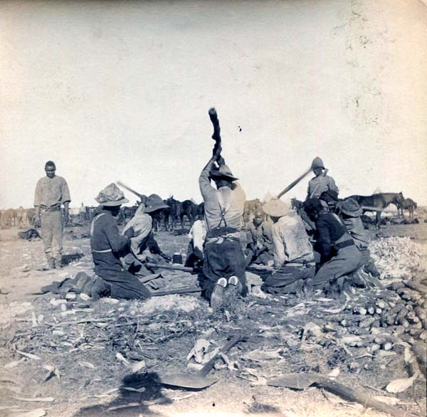 Auxiliaries Threshing Corn At Camp, Boer War 1899-1902