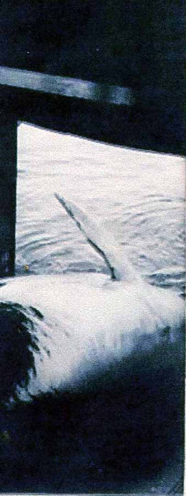 Winching Whale into Boat c.1937