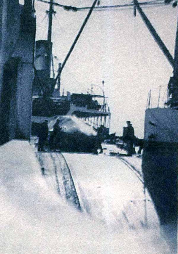 Whale Landed onto Ship c.1937
