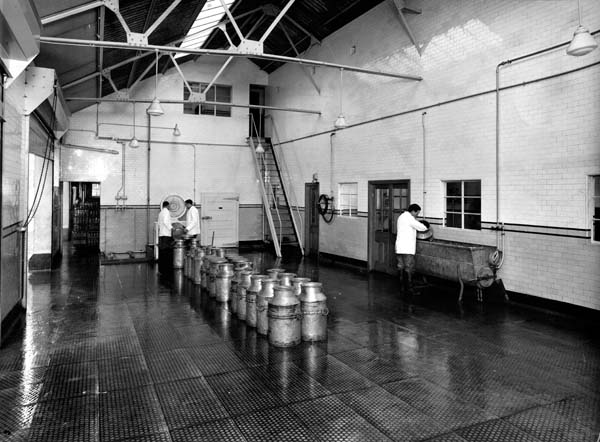 Line Of Milk Urns At Leith Provident Dairy 1930s