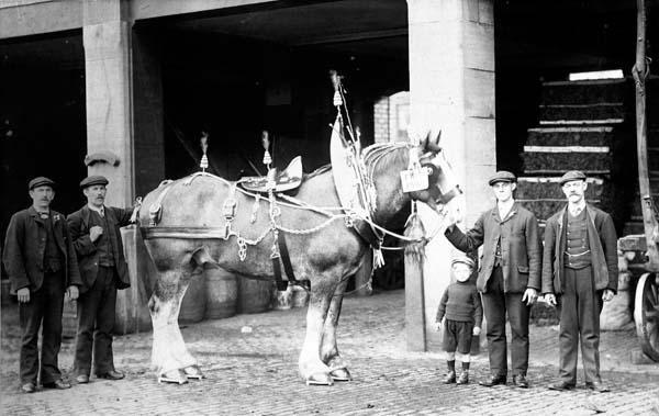 Prize-Winning Horse At James Ballatine Whisky Bonds 1909