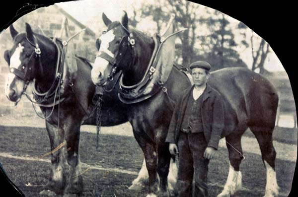 Fife Farm Boy With Work Horses 1892